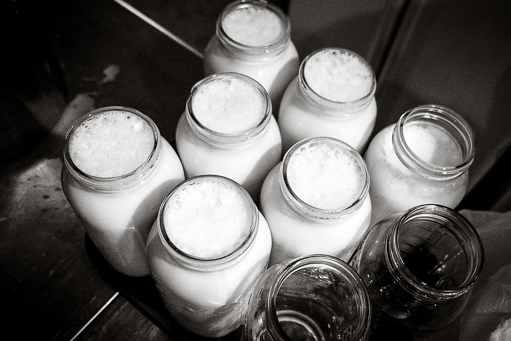 Fresh Raw Milk at EZ Rocking Ranch | August 23, 2014