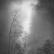 Mist over the Avon Gorge, Chatelherault, Hamilton