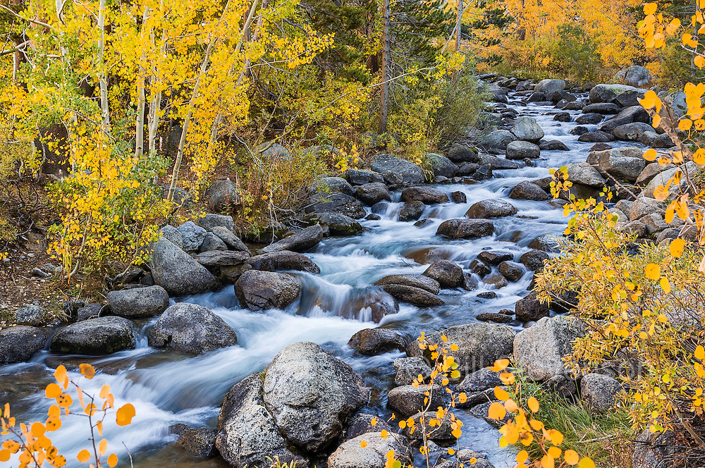 A picture of Bishop Creek flowing through yellow aspen trees in the Sierra mountains of California.