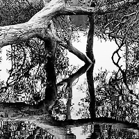 Tree growing in lake reflected in the lake