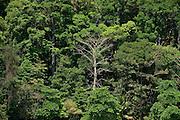 Forest canopy of Isla Paridas. Chiriqui Gulf, Chiriqui province, Panama, Central America.