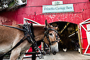 A carriage mule team rests in front of the Palmetto Carriage barn in historic Charleston, SC.