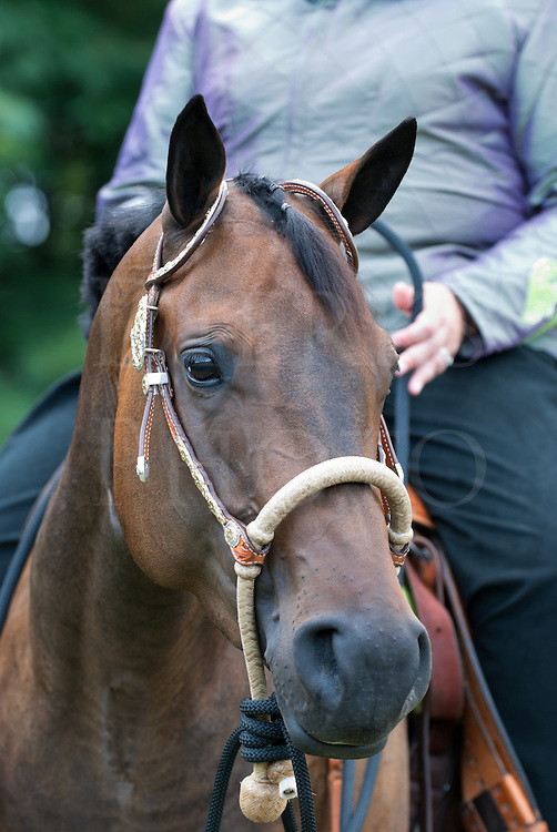 Horse wearing a bosal bit less bridle, decorative tack, unidentifiable rider, head shot.