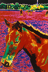 Horse of a different color Abstracts