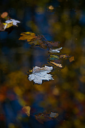 Stock photo of fallen foliage floating on a Texas hill country river