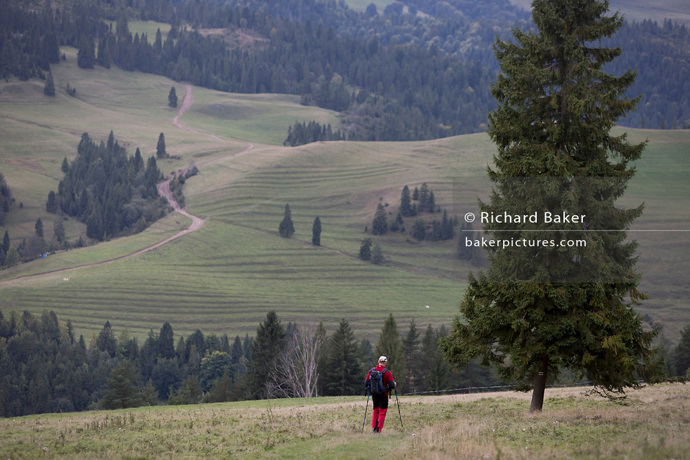 A single hiker descends from the tops of southern Polish mountains, on 20th September 2019, Biala Woda, Jaworki, near Szczawnica, Malopolska, Poland.