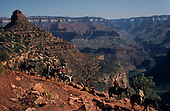Grand Canyon Bright Angel Trail Mules
