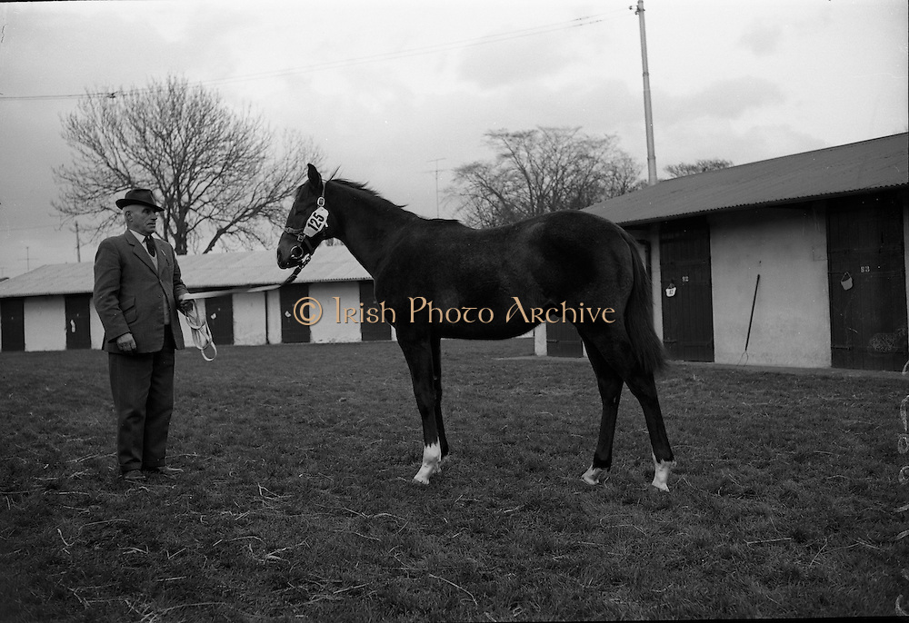 15/11/1965<br /> 11/15/1965<br /> 15 November 1965<br /> Goffs November Bloodstock Sales at the RDS Sale Paddocks, Ballsbridge, Dublin. The highest price of the day was paid by the British Bloodstock Association for a brown colt foal, property of Mrs Mary Annesley. The price paid was &pound;2100.
