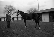 15/11/1965<br /> 11/15/1965<br /> 15 November 1965<br /> Goffs November Bloodstock Sales at the RDS Sale Paddocks, Ballsbridge, Dublin. The highest price of the day was paid by the British Bloodstock Association for a brown colt foal, property of Mrs Mary Annesley. The price paid was £2100.