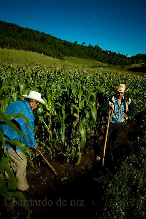 Proyecto de los maices en Mexico, Puebla Mexico.Photographer: Bernardo De Niz
