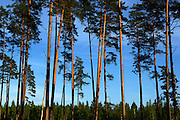 Aukstaitija National Park, Lithuania, Baltic States