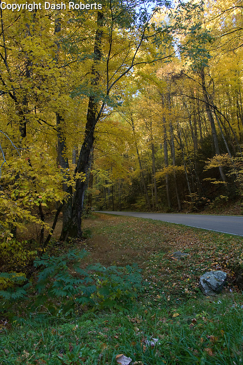 Fall colors along roadway in the Great Smoky Mountains National Park.