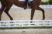Dressuurring<br /> European Championships Dressage U25 2016<br /> © DigiShots
