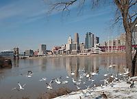 Cincinnati Skyline and Seagulls
