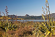 distinctive castlerock sits on top of rolling hills and flax, typical of the new zealand landscape, matarangi harbour, coromandel, new zealand