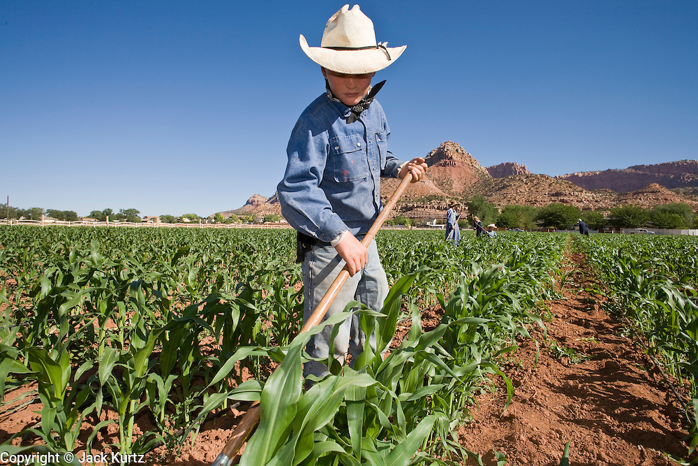 "June 16, 2008 -- COLORADO CITY, AZ: A member of the Jessop family, a polygamous family and members of the FLDS in Colorado City, AZ, weed the community corn field. The family grows about 30 percent of the food they consume and buy the rest at the town mercantile store. Although their fields are not ""organic"" according the Department of Agriculture standards, the Jessops use as few chemicals as possible and try do weed and pest control by hand. Colorado City and neighboring town of Hildale, UT, are home to the Fundamentalist Church of Jesus Christ of Latter Day Saints (FLDS) which split from the mainstream Church of Jesus Christ of Latter Day Saints (Mormons) after the Mormons banned plural marriage (polygamy) in 1890 so that Utah could gain statehood into the United States. The FLDS Prophet (leader), Warren Jeffs, has been convicted in Utah of ""rape as an accomplice"" for arranging the marriage of teenage girl to her cousin and is currently on trial for similar, those less serious, charges in Arizona. After Texas child protection authorities raided the Yearning for Zion Ranch, (the FLDS compound in Eldorado, TX) many members of the FLDS community in Colorado City/Hildale fear either Arizona or Utah authorities could raid their homes in the same way. Older members of the community still remember the Short Creek Raid of 1953 when Arizona authorities using National Guard troops, raided the community, arresting the men and placing women and children in ""protective"" custody. After two years in foster care, the women and children returned to their homes. After the raid, the FLDS Church eliminated any connection to the ""Short Creek raid"" by renaming their town Colorado City in Arizona and Hildale in Utah.  Photo by Jack Kurtz / ZUMA Press"