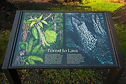 Lava tree molds, Lava Tree State Monument, The Big Island, Hawaii USA