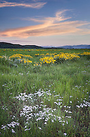 Sunset over wildflower meadows at Antelope Flats, Grand Teton National Park Wyoming