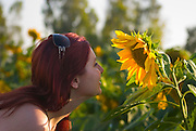 Young woman admiring a blooming sunflower plant.