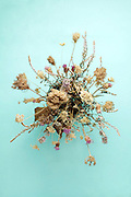 overhead view of various dried wild field flowers and grasses