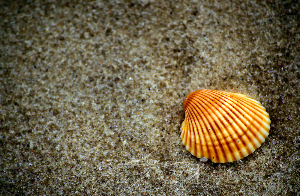 An orange seashell lies in the sand on Dauphin Island, Ala. Dec. 25, 2011.