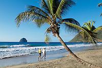 France, Martinique, Rocher du Diamant, Plage et cocotier // France, Martinique, Diamond, beach and palm tree