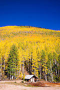 Fall aspens and mining cabin on Red Mountain Pass, Uncompahgre National Forest, Colorado USA