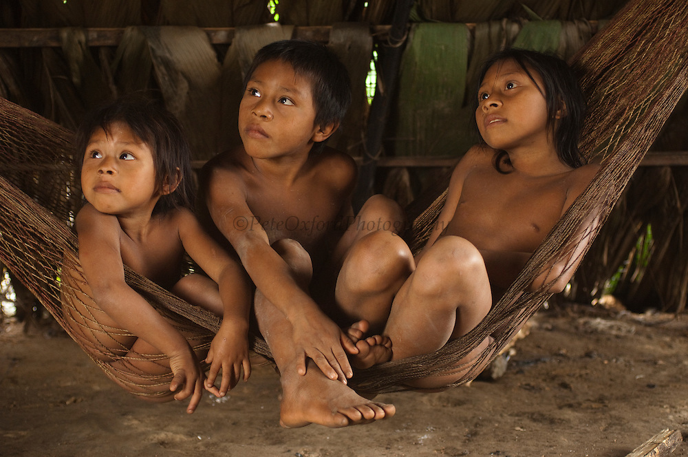 Huaorani Indian children in hammock. Gabaro Community. Yasuni National Park.<br /> Amazon rainforest, ECUADOR.  South America<br /> This Indian tribe were basically uncontacted until 1956 when missionaries from the Summer Institute of Linguistics made contact with them. However there are still some groups from the tribe that remain uncontacted.  They are known as the Tagaeri &amp; Taromenani. Traditionally these Indians were very hostile and killed many people who tried to enter into their territory. Their territory is in the Yasuni National Park which is now also being exploited for oil.
