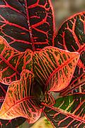 Costa Rica - Flowers.