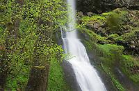 Winter Falls, Silver Falls State Park, Oregon