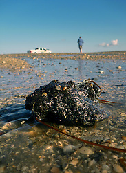12th October, 2013. Wisner Beach, Port Fourchon, Louisiana.<br /> Following recent storms in the Gulf of Mexico, tar balls, oil particles and and vast oil mats from the BP Deepwater Horizon Macondo Well continue to wash ashore in abundance. 3 1/2 years since the worst oil spill in history and on the eve of a potentially historic penalties which could be as high as $18 billion being levied against British Petroleum by the Federal Governemnt, it is clear that BP's problems will not go away any time soon.