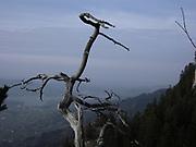 Gruyère lake with old dried tree. Vue sur le lac de Gruyère depuis la colline du Bifé / Biffet, Gruyère, Suisse. Blick auf den Greyerzersee mit knorrigem Baum beim Einnachten. © Romano P. Riedo | fotopunkt.ch