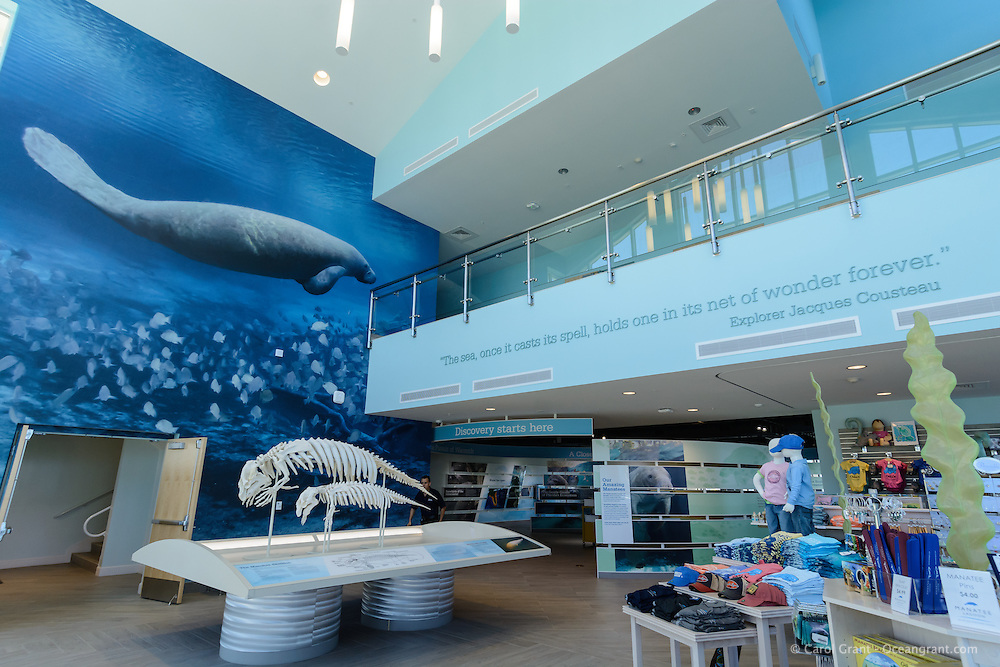 Manatee Lagoon FPL Riviera Beach location Main Lobby. That is my (Carol Grant) two and a half story high manatee and gray snapper photograph. There is an inspiring Cousteau quote, mother and calf manatee skeletons, gift shop and entrance to educational area that is beautifully designed.