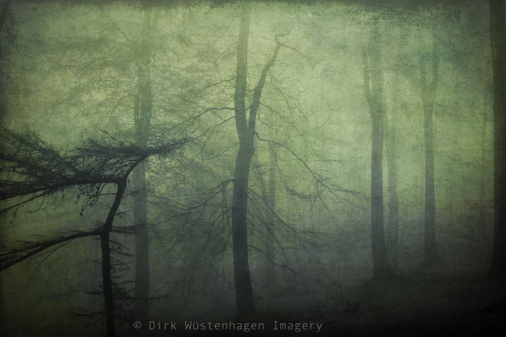 Forest on a misty morning - textured photograph<br />