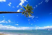 Sideways Palm Over Lahaina Beach