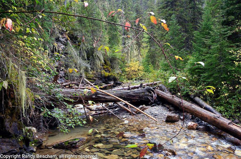 Silvertip Creek in early fall. From my 2013 Artist-in-Wilderness Connection program residency run by the Flathead National Forest, Hockaday Museum of Art, Bob Marshall Wilderness Foundation and the Swan Ecosytem Center. Flathead National Forest, northwest Montana.