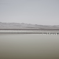 A pedestrian walks in the distance with his dogs for a walk on the Salton Sea, where a breeding colony of waterbirds reflected in lake.