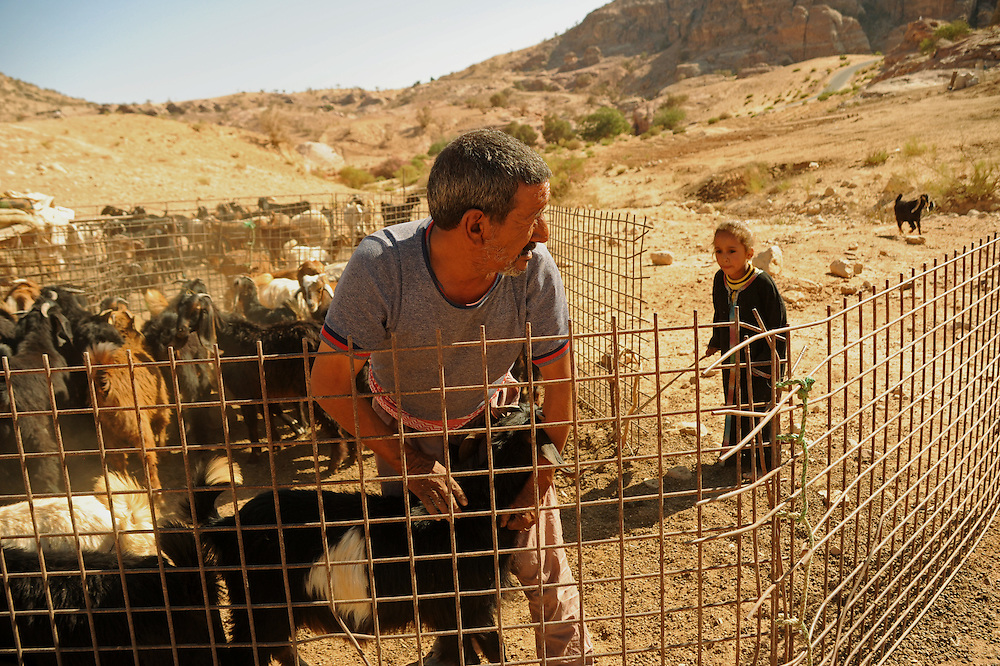 Rahad looks at her father while he is choosing the goat they are going to kill for dinner