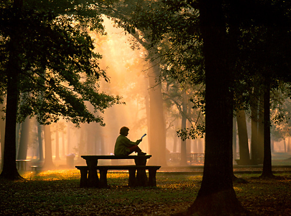 Stock photo of a woman reading a book in Memorial Park early on a quiet morning