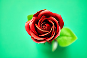 Minimalistic of an artificial red rose image photographed in studio isolated on green background