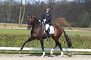 Theo Hanzon - Zhivago<br /> 2e Selectie WK Jonge Dressuurpaarden 2010<br /> © DigiShots