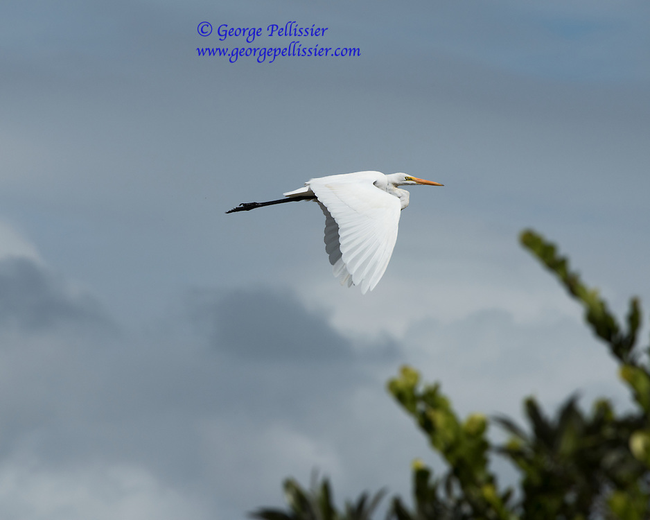 A Heron at Shark Valley, Everglades National Park, FL.