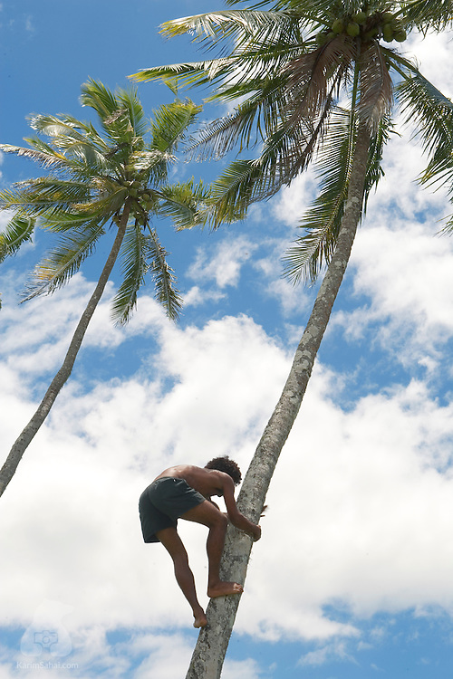 Man climbing a tall coconut tree, Koromakawa, Viti Levu, Fiji.<br /> <br /> Coconut oil, or copra, is one of Fiji's main exports.