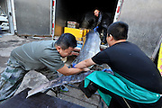 QINGDAO, CHINA - SEPTEMBER 12: (CHINA OUT) <br /> <br /> Fisherman Catches Over 300 Kilograms Swordfish<br /> <br />  People upload a 310-kilogram weight swordfish from a freight car on September 12, 2015 in Qingdao, Shandong Province of China. A fisherman caught a swordfish on Friday in Yellow Sea which weighted 310 kilograms and was in 4.1 meters long. The swordfish has carried to a seafood supermarket in Qingdao City.<br /> ©Exclusivepix Media