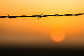 Barbwire and Fence