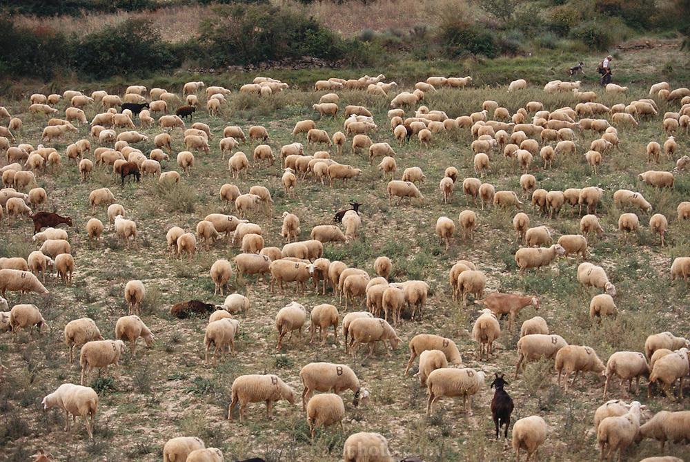 Pablo Rodriguez, Shepard, with his flock in Gallipienzo, Navarra, Spain.