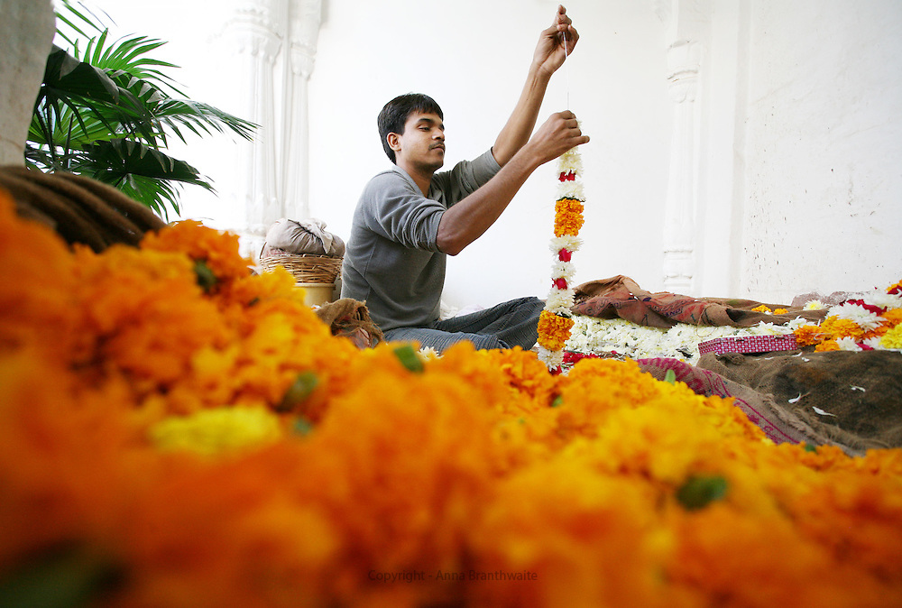 A man stitches a garland of marigolds in a flower market place, Jodhpur.