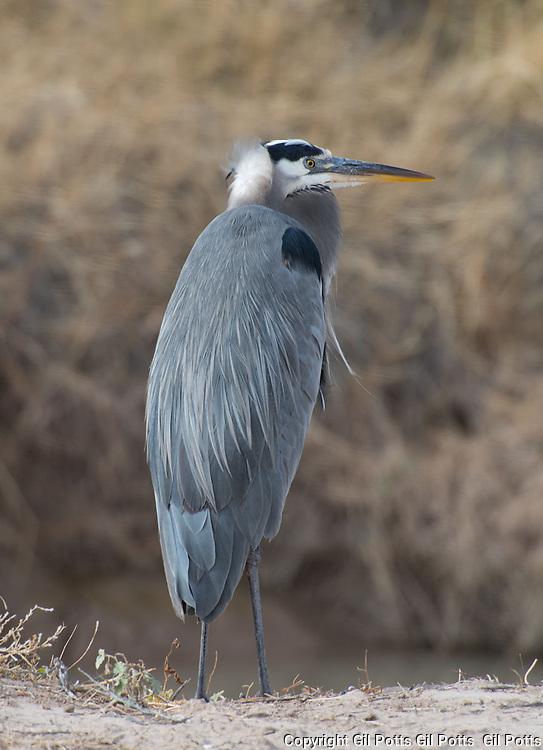 Bosque del Apache, New Mexico  Birds of the Bosque at Bosque del Apache, New Mexico