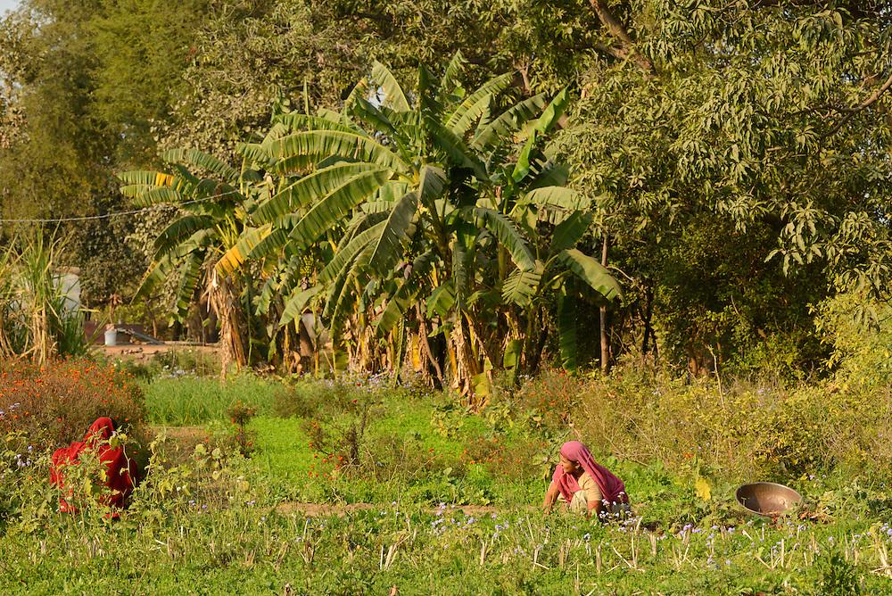 People in village near  ,City of Bundi, Rajasthan,India,Asia.