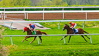 Horse racing on the turf track at Keeneland  Racecourse, Lexington, Kentucky USA.